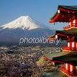 ☆ 富士山とツバキ