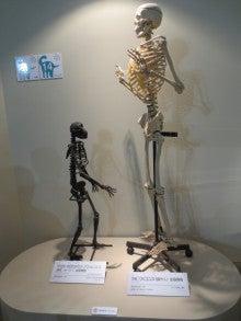 メガ恐竜展2015 8