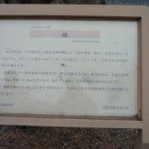 前玉神社 (再)