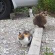 猫一家らしい