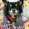 HAPPY BIRTHDAY( ^-^)ノ∠※。.:*:・'°☆の画像