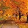 秋に向かってケアしてますか?の画像