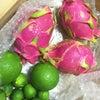石垣島のドラゴンフルーツの画像