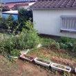 うちの家庭菜園 20…