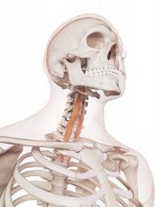 実践!硬い頸長筋を筋膜のつながりを使ってゆるめてみました。 | 前野 ...