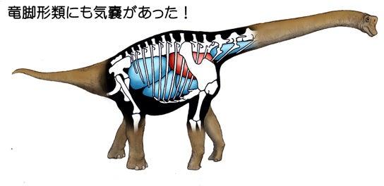 竜脚形類の気嚢
