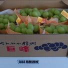 信州産の葡萄が美味しい季節になりましたね!の記事より