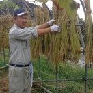 ★わたしのお米を育てる半年プレミアムコース★の記事より