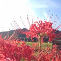彼岸に咲く花