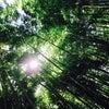 鎌倉〜の画像