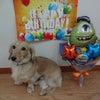 HAPPY BIRTHDAYの画像