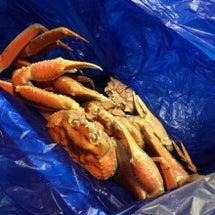 蟹蟹〜٩(๑•̀ω•…