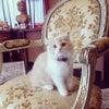 ♡やっぱり猫が好き!♡の画像