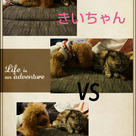 きいちゃん vs きぃちゃんの記事より