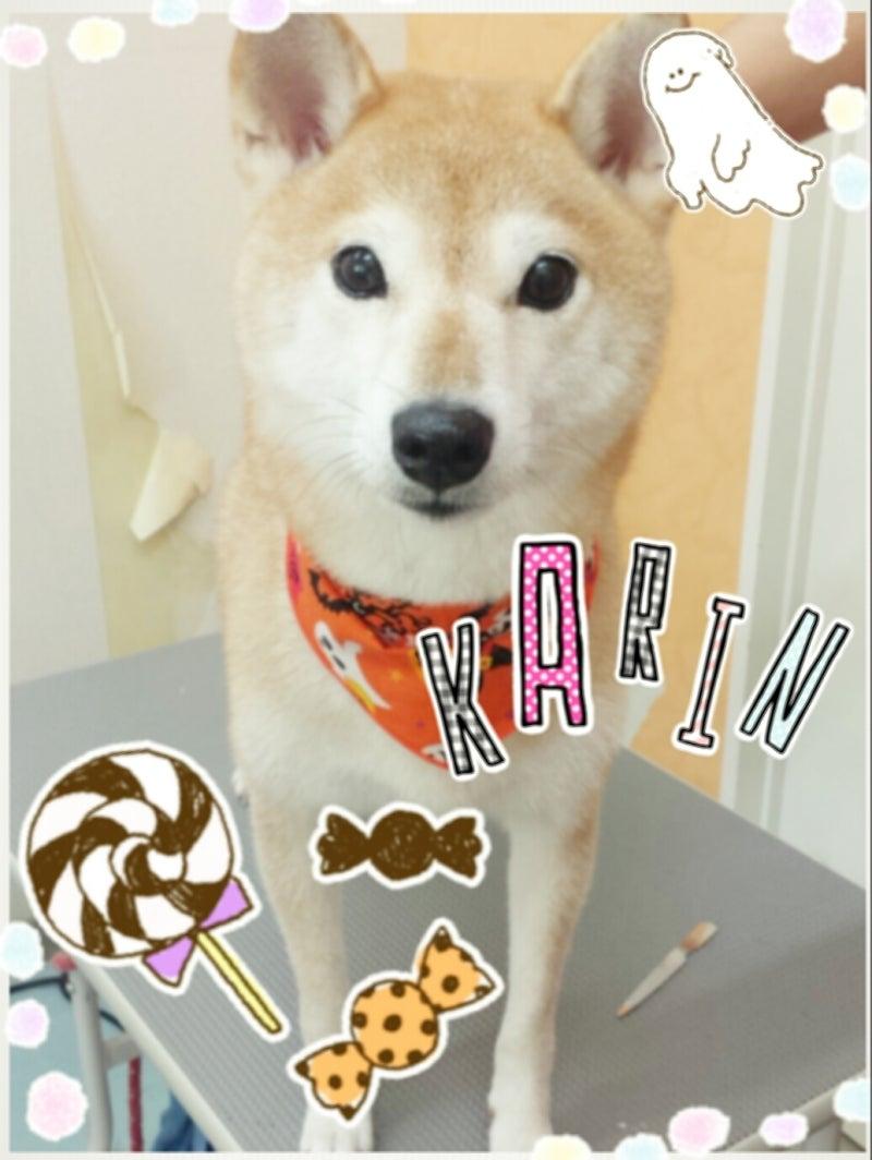 ハロウィンキャンペーン☆7日・8日の記事より
