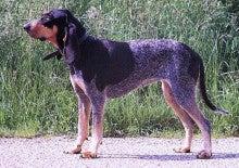 犬種の常識-21(ハウンド) | 先祖を尋ねて