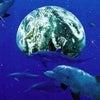 明日、新月に全ての生命へ『レインボードルフィン』無料遠隔ヒーリングの画像