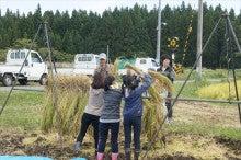 20151003稲刈りツアー⑨稲干し