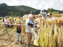 20151003稲刈りツアー24稲刈り