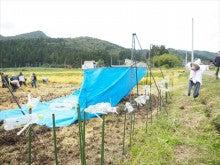 20151003稲刈りツアー23稲刈り
