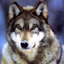 ダイスロール人狼して…