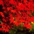 秋バテの、予防と改善…
