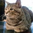 猫ゎ。気ままで♪おた…