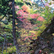2015 山梨の紅葉…