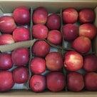 りんごの季節ですねの記事より