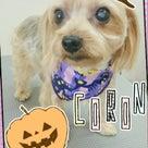 ハロウィンキャンペーン☆17日・18日の記事より