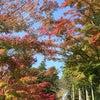 秋の限定公開 高野山の画像