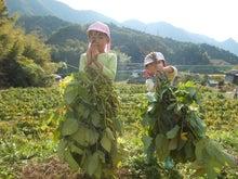 収穫祭2012の写真