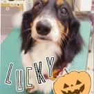 ハロウィンキャンペーン☆19日~23日の記事より