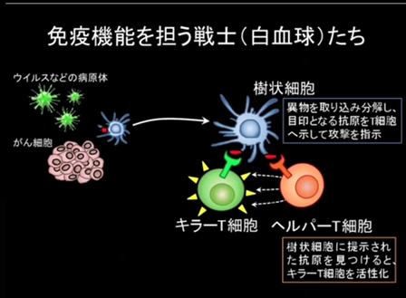 卵巣がんになった`zaki'の空間遊泳T細胞の働きコメント
