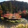 中野もみじ山の紅葉。の画像