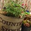 植物が増えていく。。。の画像