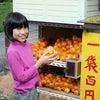 みかんの里 和歌山県有田に着きました!の画像