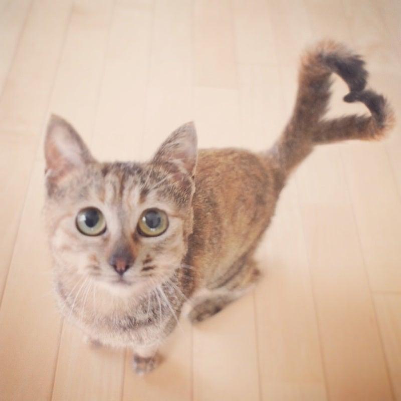 ハートしっぽ猫の作り方