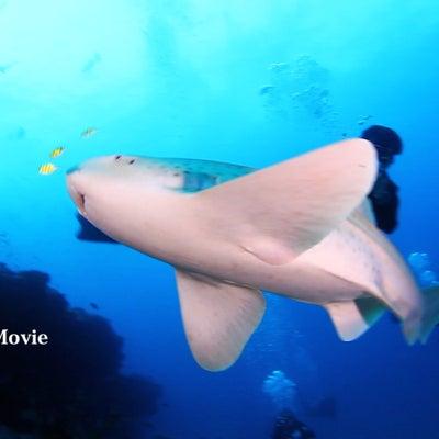 探検ダイビングいくぞーーの記事に添付されている画像