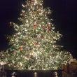 恵比寿のクリスマスツ…