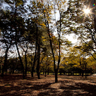 季節とともに変化する(秋の代々木公園@写真)の記事より
