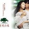 2006年韓国映画「連理の枝」を見たわけは・・・の画像