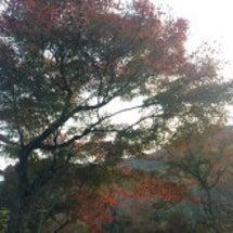 紅葉・嵐山
