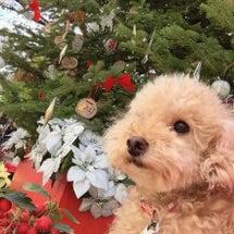 クリスマスツリーあっ…