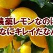 無農薬栽培レモン と…