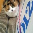引っ越し業者決定。猫…