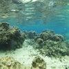 青の洞窟は中止でしたがサンゴビーチでダイビング♪12月も冬休みの予約も沖縄満喫テイクダイブでOKの画像