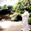 WEDDING  サプライズ編の画像
