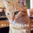 動物病院で『猫あるあ…