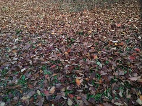 落ち葉の絨毯の記事より